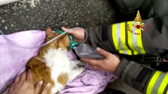 Firefighters saved the cats with oxygen masks (Picture: CEN)