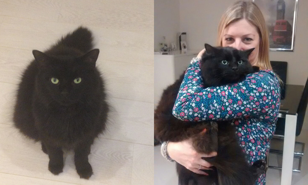 Cat who survived being attacked with a firework overcomes trauma to trust people again