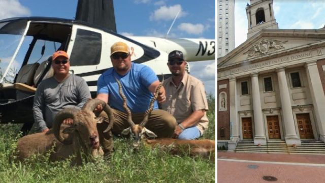Exotic animals didn't stand a chance after hunters used illegal helicopter to shoot them
