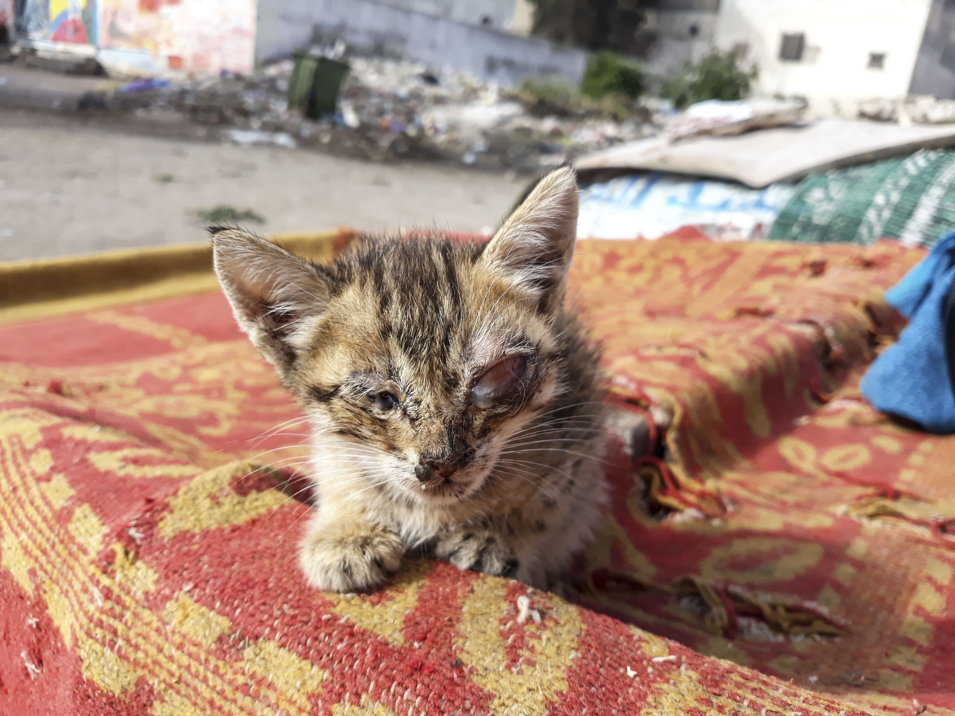 Kittens abandoned on a rubbish dump and left to die