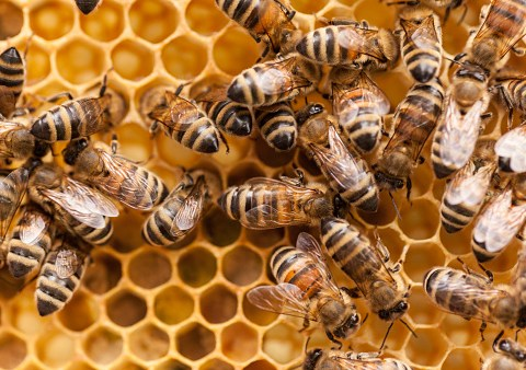 World Bee Day: How can you be a friend to bees?