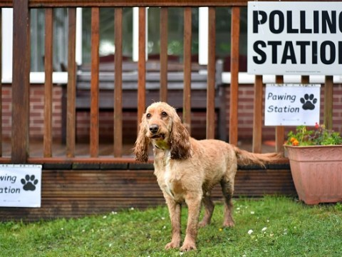 Are dogs allowed at polling stations for the local elections?