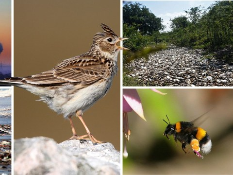 One million species face extinction unless we stop destroying nature