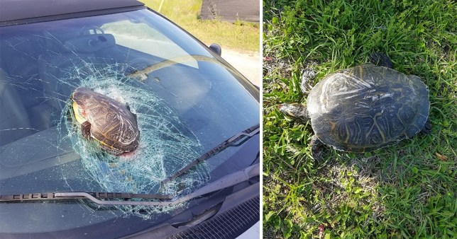 A flying turtle caused £1,500-worth of damage to a car after it went flying through the windscreen