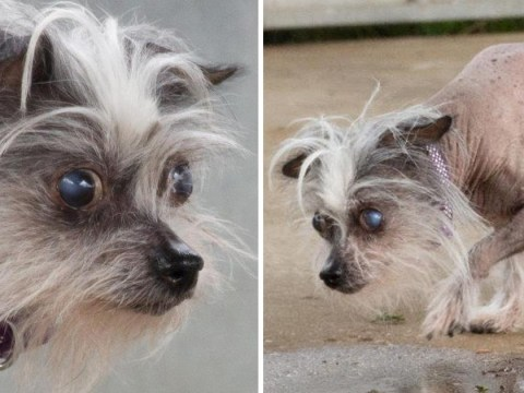People won't adopt this dog because she's too 'ugly' – can you give her a forever home?