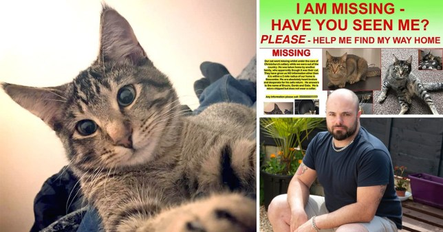 A cat has gone missing after a cattery gave it to the wrong owner in bournemouth