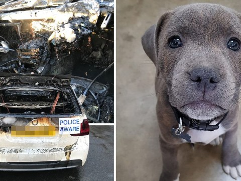 Puppy escapes burning car before it blows up in ball of flames