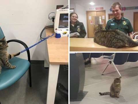 Cat who cuddled patients at A&E banned from entering hospital