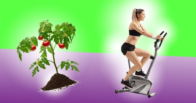 A compilation of a woman on a cycling machine and a tomato plant (to represent gardening) on a green and purple background