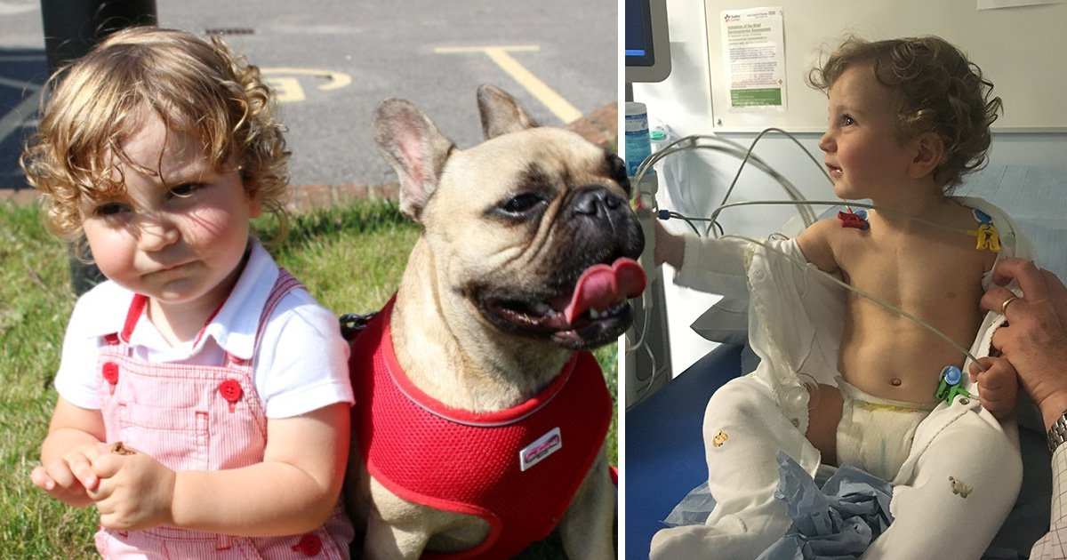 Parents save doctor's dog's life to thank him for saving their baby's life