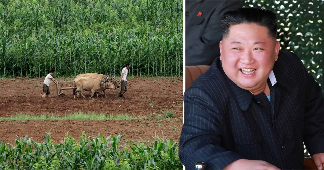 A picture of a farm in North Korea next to the country's leader Kim Jong Un