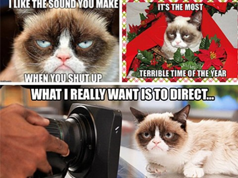 The 30 most iconic Grumpy Cat memes
