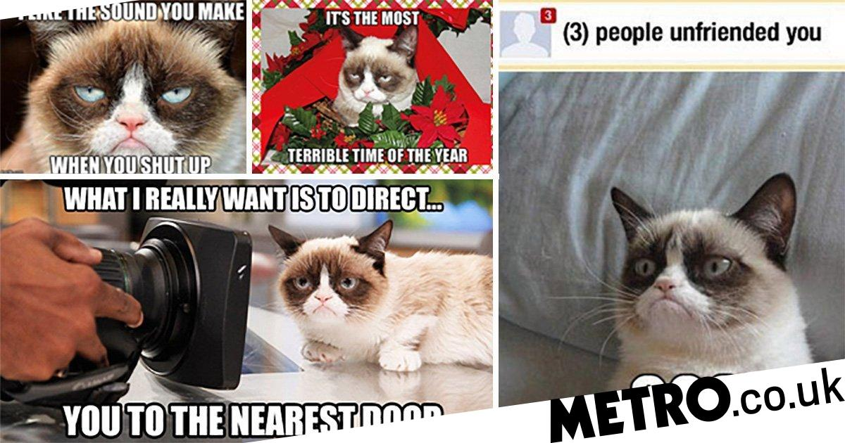 The 30 most iconic Grumpy Cat memes | Metro News