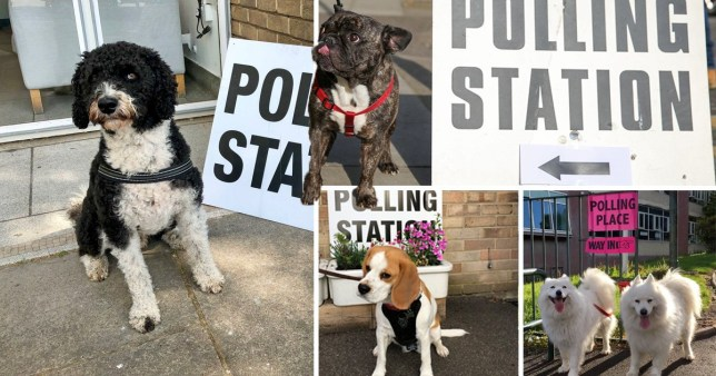 Dogs waiting at polling stations to vote in the European Parliament elections