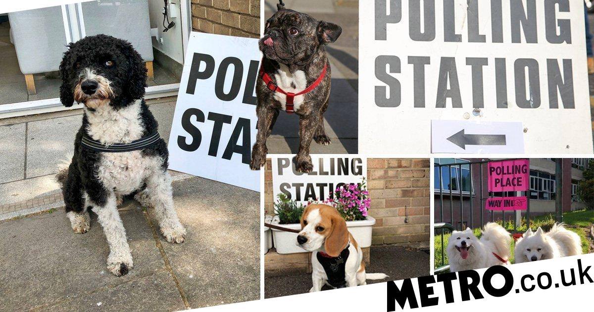 Dogs at polling stations are here to warm the hearts of Brexit-tired Brits