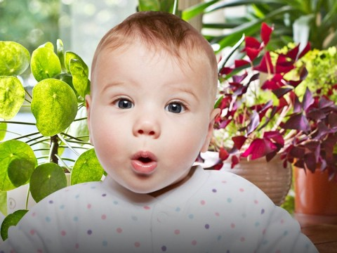 Plant-themed baby names are a major trend right now