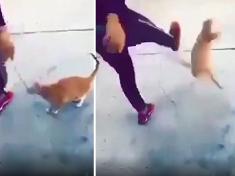 Hunt for man who drop-kicked cat and filmed it