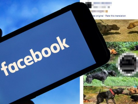 Facebook is 'being used to broadcast dogfighting and enable animal trafficking'