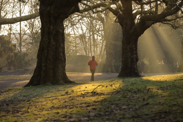 LONDON, UNITED KINGDOM - 2019/01/31: A jogger is seen walking in Finsbury Park, north London during a golden sunrise with sun rays thought the trees following the coldest night this winter. (Photo by Dinendra Haria/SOPA Images/LightRocket via Getty Images)