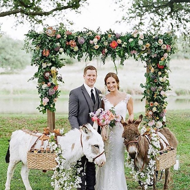 Newly Weds Foods Careers: Newly Weds Are Hiring Donkeys To Serve Beers At Weddings