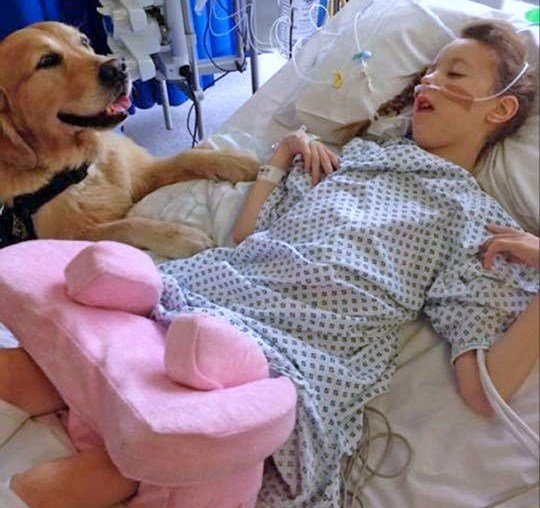 Photo a child at University Hospital Southampton during a visit from a therapy dog.