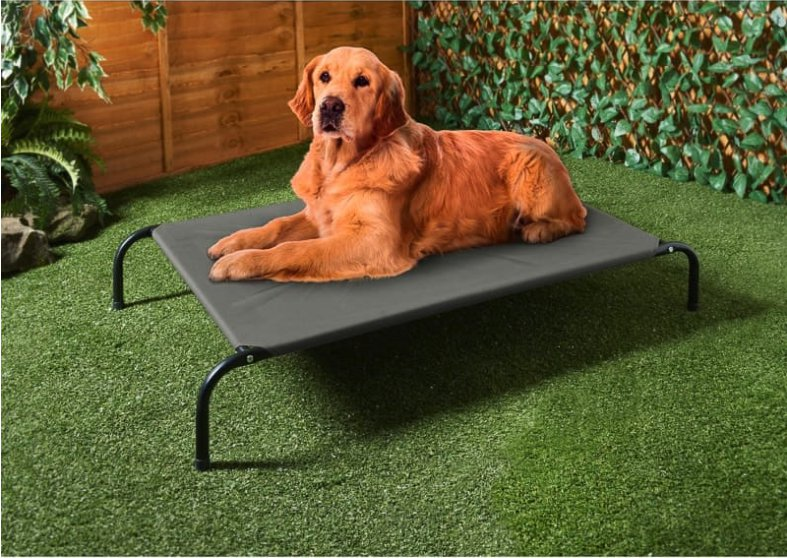 Cute dog chilling on a sun lounger