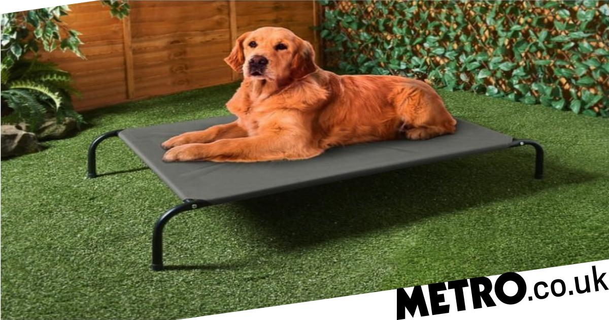 B&M is selling sun loungers for dogs so you can both chill in the garden