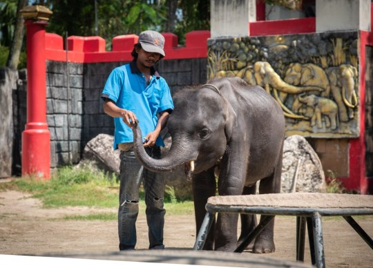 """viral baby elephant """"dumbo"""" dies after being forced to perform in thailand"""