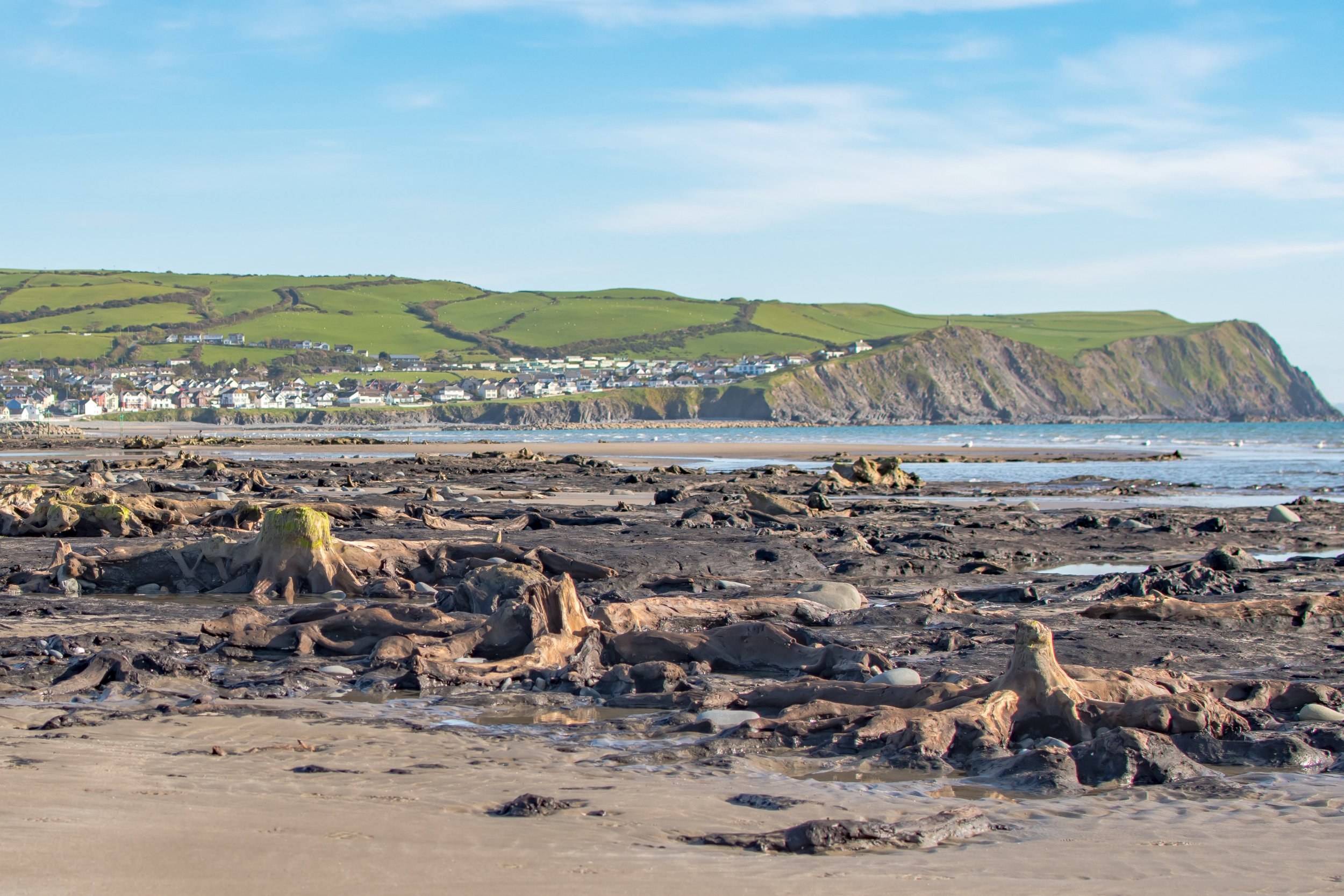 Buried Bronze Age forest revealed in aftermath of Storm Hannah