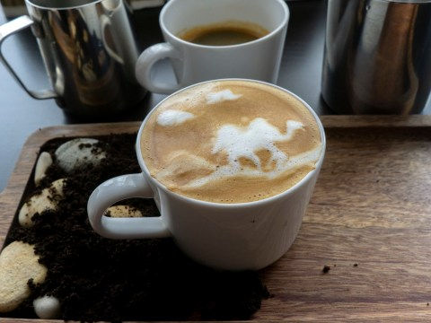 Sick of cows milk? You can now try a camel milk cappuccino