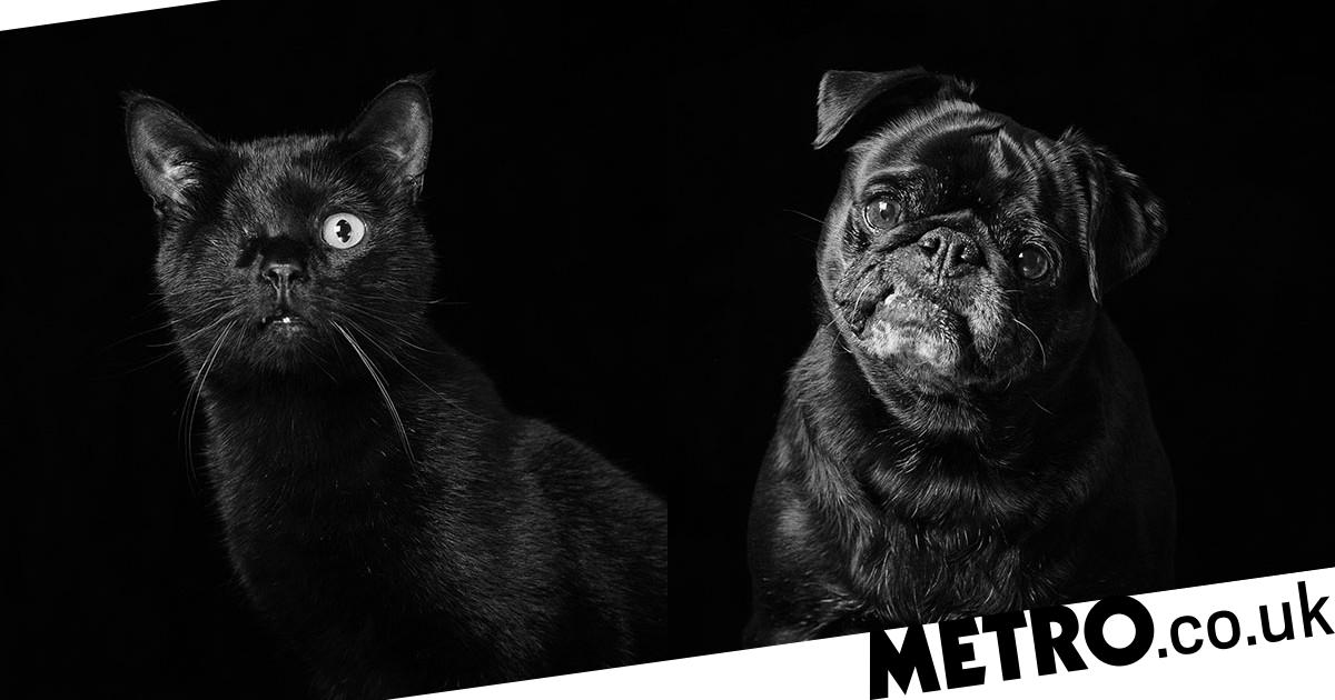 Photographer takes stunning portraits of black cats and dogs to find them homes