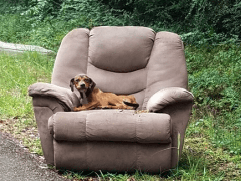 Starving puppy dumped with favorite chair to trick him into thinking owners would return