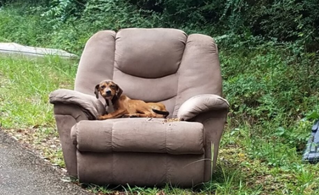 This starving puppy was dumped along the side of the road in Brookhaven, Mississippi, on his favorite chair - to trick him into thinking his cruel owners might return for him