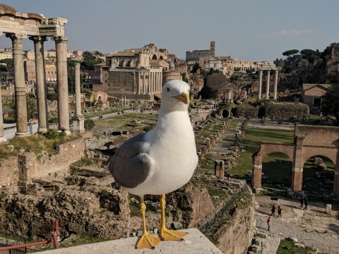 In the Eternal City of Rome you can mix relaxation with being a tourist