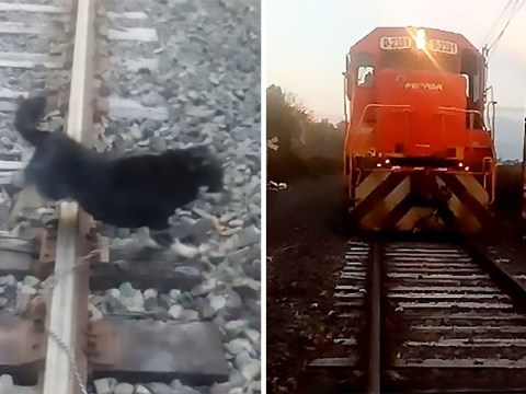 Train stops feet away from dog after driver spots it chained to tracks