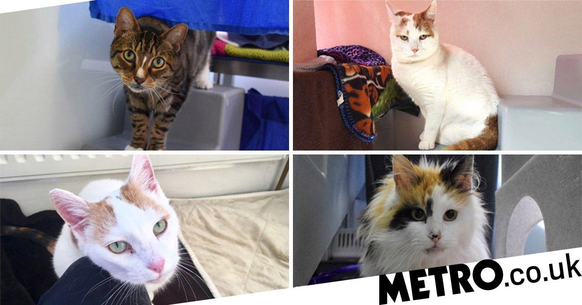 These Five Adorable Elderly Cats Are Looking For A New Home Metro News