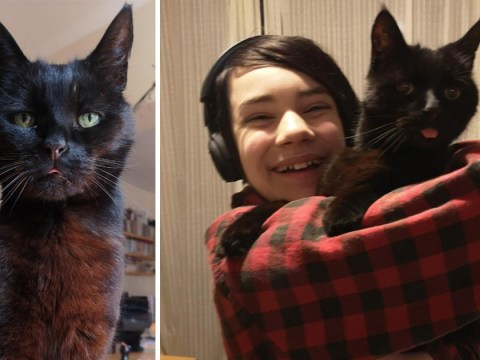 Jeffree the cat helped young boy with Asperger's cope with the sudden death of his father