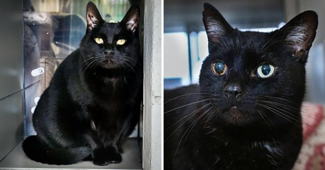 Could you find a place in your home for these cats?