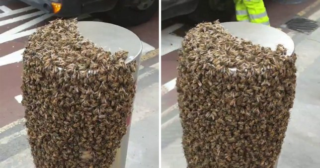 Two stills of a video taken of a swarm of bees outside an office in Holborn, Central London