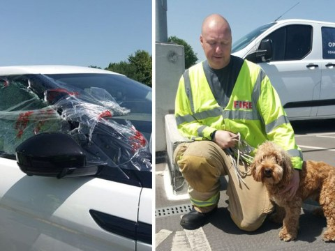 Firefighters save dog left in boiling car with no windows open