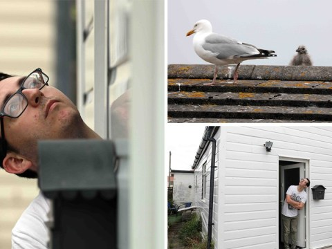Teacher told to use umbrella to protect himself from dive bombing seagulls