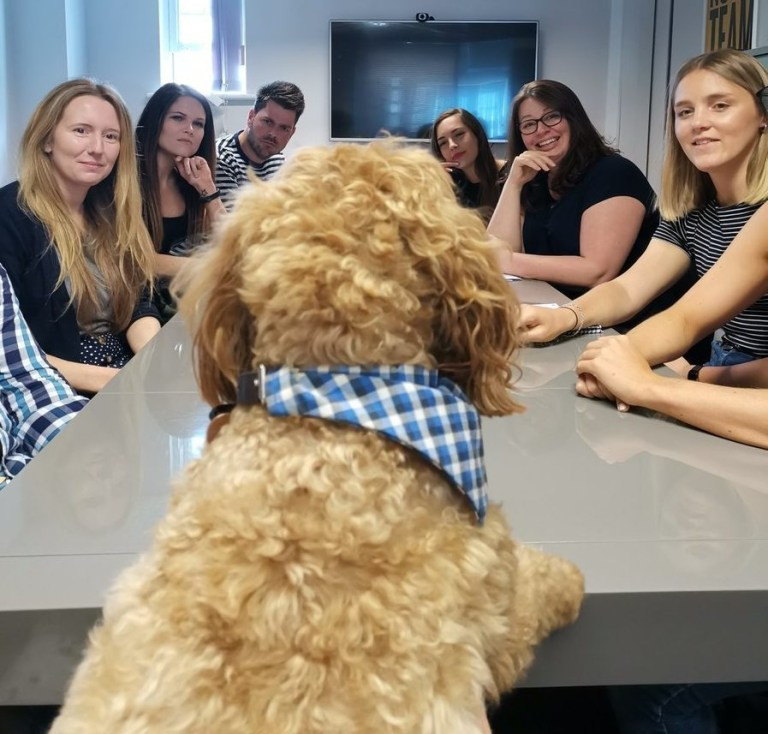 Bring your dog to work day https://twitter.com/JellybeanAgency/status/1141993618170961920 Picture: JellybeanAgency