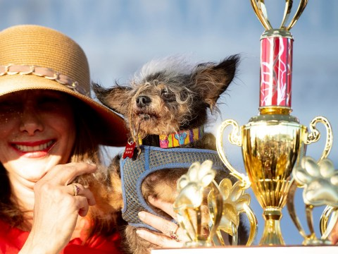 World's ugliest dog spends all his time doing good deeds for others