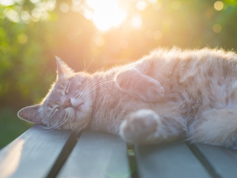 How to spot and prevent skin cancer in cats