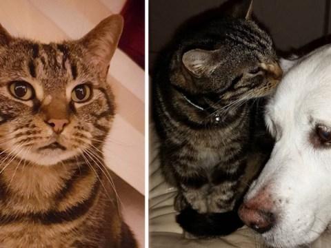 Meet Douglas – the cat who thinks he's a dog