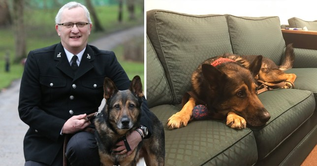 Picture of PC Dave Wardell with former service dog Finn next to a picture of Finn watching MPs discuss Finn's law in the House of Commons