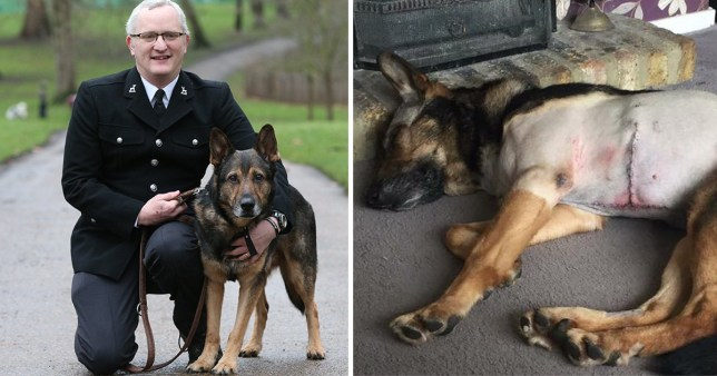 Finn's law is inspired by brave police dog Finn who was stabbed while protecting PC Dave Wardell