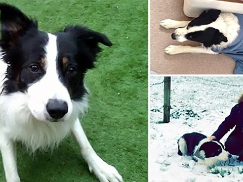 Dog accidentally re-homed by police while owner spent night in hospital