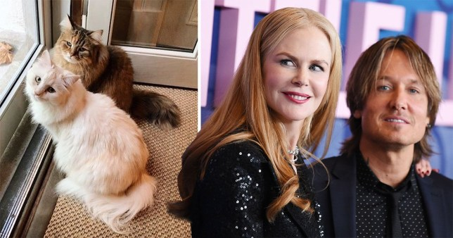 Nicole Kidman and Keith Urban and their pet cats