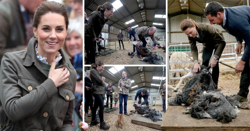 William and Kate tried sheep shearing